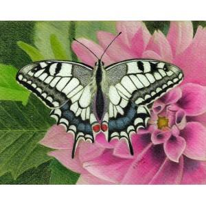 Fluttering in White